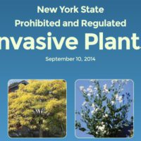 Weeds – or shrubs and floweringbushes?
